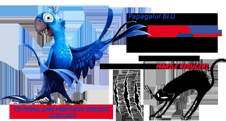 papagalul-blu-black-cat-ssexuala